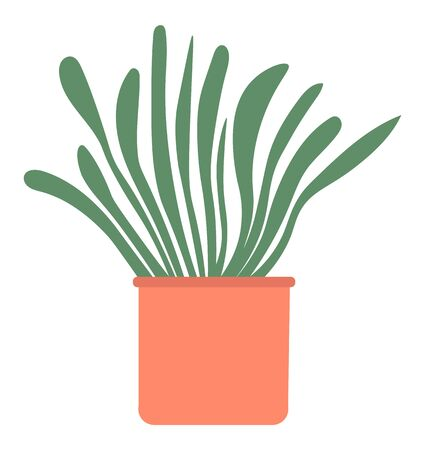Home plant in pot isolated house interior decorative object. Vector evergreen tree in flowerpot, cartoon style palm growing in bucket, domestic exotic flower