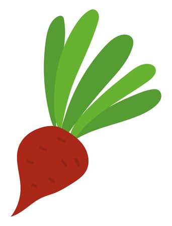 Harvesting vegetable, ripe beet with leaves, agricultural product. Harvest festival in Europe, seasonal food, card with vegetarian symbol, root. Vector illustration in flat cartoon style Illustration