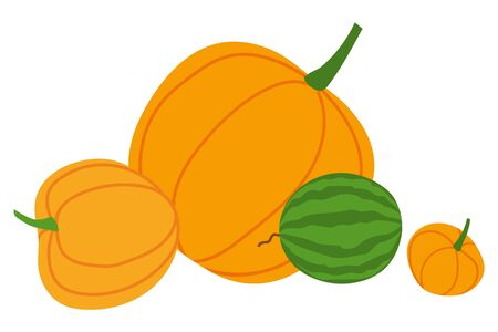 Pumpkin or squash and watermelon, autumn harvest or crop, farming and agriculture isolated vegetables. Natural food and organic product, cooking. Vector illustration in flat cartoon style