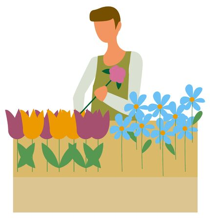 Farmer or florist picking flowers in flowerpot isolated character. Colorful daisy and tulip blossoms, blue forget-me-nots and plants seller. Vector illustration in flat cartoon style