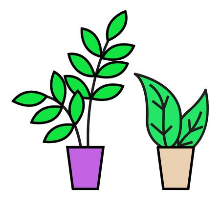 Plant in pot, isolated set of leafy botanical decoration for home or office. Decorative flowers for interior improvement. Domestic houseplants design in containers with soil. Vector in flat style Stock fotó - 134307382