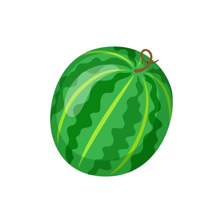 Summer exotic fruit of round shape vector. Watermelon with sweet taste, tropical meal isolated icon in flat style. Snack eating, lush berry ingredient