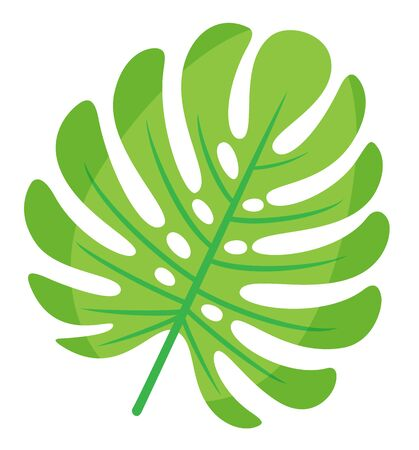Exotic leaves of monstera plant vector, isolated icon closeup. Spring and floral theme, decoration of party, foliage greenery of hawaii, flat style