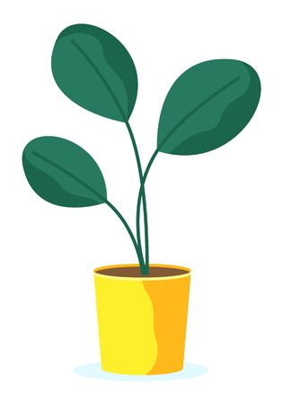 Houseplant in flower pot isolated icon. Natural leaves on branch stems, green color buds in flowerpot. Gardening and floral object, holiday decoration element. Tropical plant in cartoon style vector