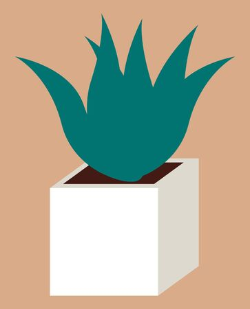 Evergreen plant in white pot. Succulent that grown indoor in potting soil. Isolated potted vegetation, decor for house and office interiors. Vector illustration of small houseplant in flat style