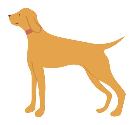 Hunting dog pointer isolated cartoon animal in flat style. Vector purebred for hunt, pedigree hound and retriever puppy. Gundog in collar with beige hair