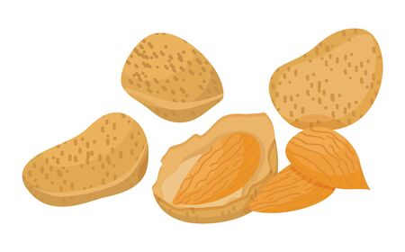 Heap of brown nuts isolated on white background. Small almond core inside nutshell. Edible product used in hair care, cosmetics as oil. Cracked and peeled raw. Vector illustration in flat style 向量圖像