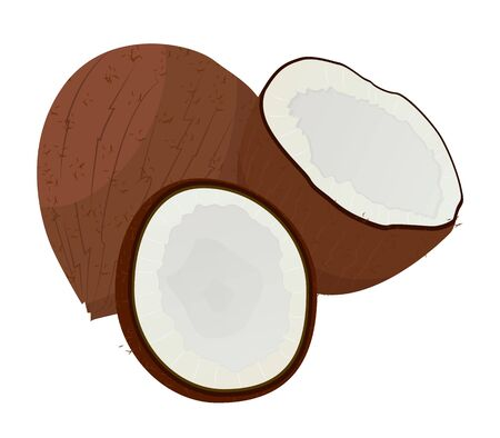 Coconut hair oil vegetarian ingredient isolated on white. Half coco in wooden shell natural cosmetic product. Vitamin ripe nutrition for hair or skin spa. Vegan and healthy food in brown color vector