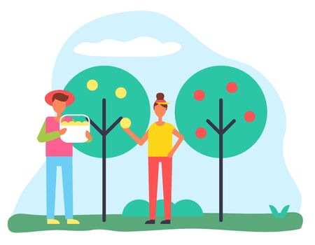 Characters picking apples in garden, man and woman gardening together. Male holding basket and female filling container with harvested fruits. Ripe and sweet goods of farmers, vector in flat