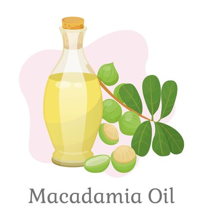 Macadamia oil for skincare or hair growth and care, treatment and protection. Special essence in bottle, fruits and branch with leaves. Raw nutritious and beneficiary ingredient. Vector in flat style