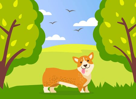 Happy cute corgi dog is walking in green summer park background. Funny ginger puppy with short paws and protruding tongue is walking in forest or meadow among trees and shrubs. Spring landscape