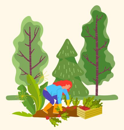 Farming female character gathering beetroots wearing protective rubber gloves. Plantation with organic production and food. Woman with wooden box to put ripe vegetables, vector in flat style