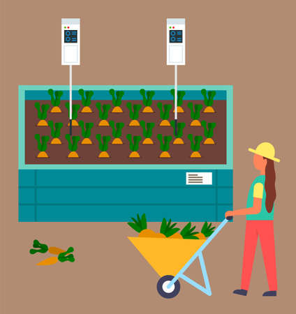 Young woman gardener holding wheelbarrow with carrots standing near the garden with growing carrots. Farmer control process of growing. Automatic system of watering harvest. Computer in soil
