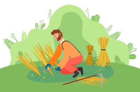 Farmer wearing in overalls harvesting ears of wheat on the field. Agricultural worker, autumn harvest. A man mower with a scythe cuts grain crop and binds in sheaf. Ecological farming and manual labor