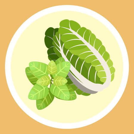Isolated in circle chinese cabbage and basil leaves. Natural organic vegetable and greenery for salad or culinary. Healthy eating, keeping diet, vegeterian concept. Juicy salad leaves, eco plants