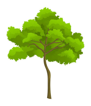 Cartoon illustration of green tree isolated at white background. Tree with crown. Nature concept. Vector emblem. Landscape interface, icon tree of wood. Flat style of organic plant Ilustracja