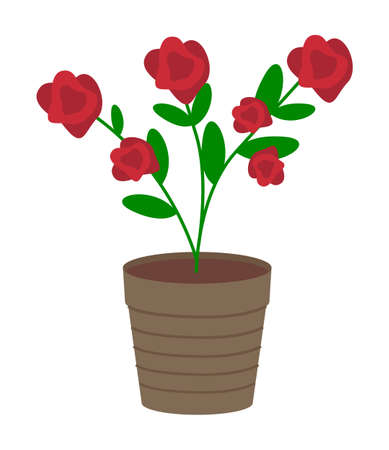 Vector illustration of growing plant with flower in pot isolated on white background. Potted bush with red flower. Garden rose in container. Plant for garden or apartment design, tree shaped rose bush Ilustracja