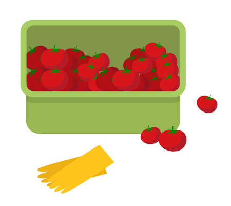 Juicy tomato. Fresh ripe vegetables in plastic box and yellow garden gloves flat style vector illustration. Autumn harvest of red fruits collected in a container. Vegetable is used for juice and salad