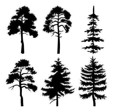 Silhouette of different trees with leaves isolated on white background. Tall tree thick trunk crown at height. Decorative vegetation of a city park or garden, coniferous and deciduous forest plant