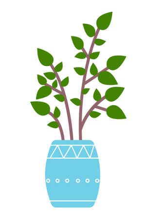 Pot with houseplant isolated at white background. Vector flowerpot of decorative green plant with short leaves in ceramic pot. Indoor plant concept of domestic greenery. Icon for home interior plant