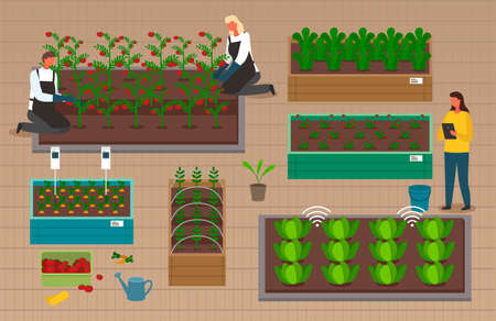 Urban farming, gardening or agriculture. Seedlings planting to the garden bed. Man and woman growing vegetables and berries using modern technology, use of greenhouses. People harvest in boxes Çizim