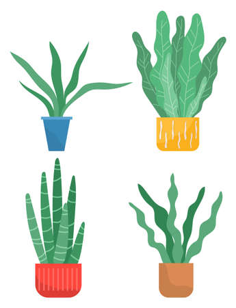 Set of pot with houseplant isolated at white. Vector flowerpot of decorative green plant with long leaves in ceramic pot. Indoor plant concept of domestic greenery. Icon for home interior plant