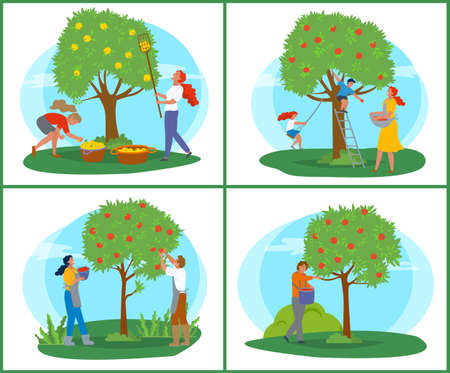 People picking apples, tree with ripe fruit, farmer with basket near wood, orchard symbol. Person in apron with rustic food, gardener in countryside vector. Pick apples concept. Flat cartoon Иллюстрация