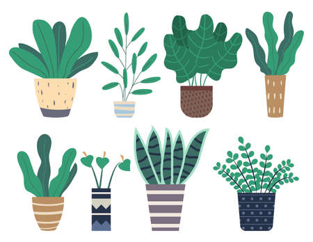 Set of green indoor houseplants and flowers in pots icons on white. Plants growing in pots or planters. Collection of beautiful natural home and office decorations. Trendy vector in flat cartoon style  イラスト・ベクター素材