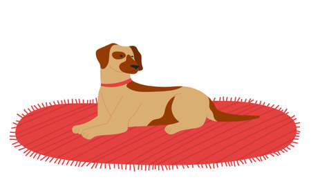 Dog lying on textile carpet resting isolated at white background, domestic pet relaxing at soft cover, cute purebred dog with collar, animal with spots on fur, dog waiting for owner, friend of people