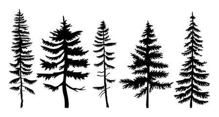 Set of vector black silhouettes firs and pines. Flat illustrations of forest trees. Winter wood. Taiga high powerful spruce. Forever green tree. Plants and trees. Flat vector isolated on white