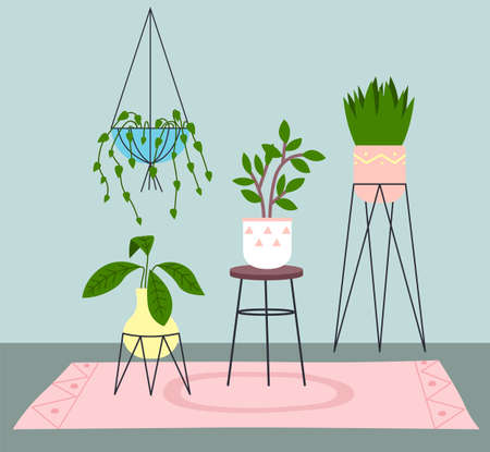 Decoration for room. Decorative different houseplants growing in pots in room on carpet. Pots at metal stand or hanging pot. Greenery element decor. Collection of indoors flower pots, flat style
