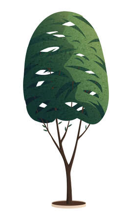 Green tall tree with a lush crown, thin brown trunk and branches isolated on white background. Flat vector illustration of big plant with foliage round shape, landscape element in cartoon concept 向量圖像