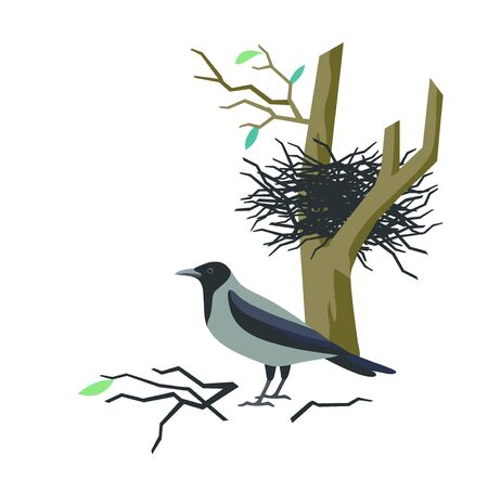 Vector illustration with rook bird and nest isolated on white.