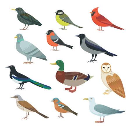 Big set of city birds. Vector original illustration Ilustración de vector