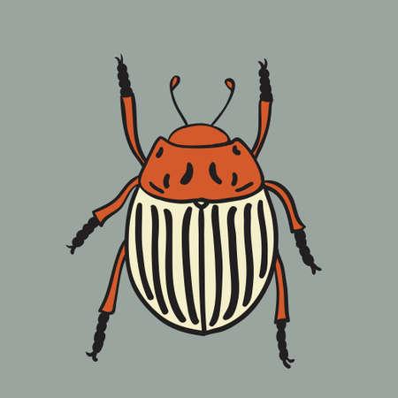 Potato beetle illustration. Vector design isolated element. Vector illustration