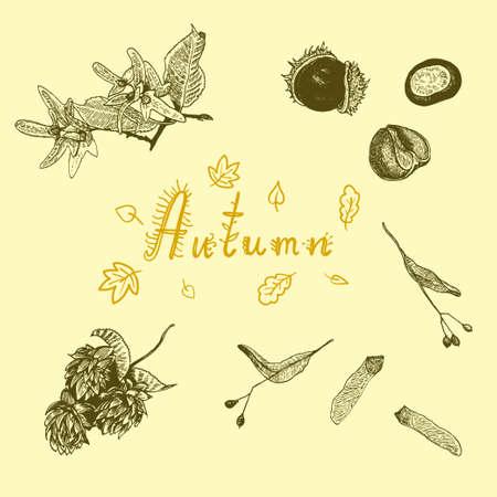Set with autumn tree seeds. Ink hand drawn botanical illustration . Vector illustration  イラスト・ベクター素材