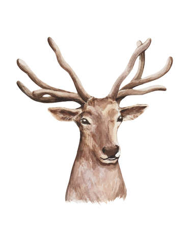 he deer isolated on the white background. Watercolor high quality illustration