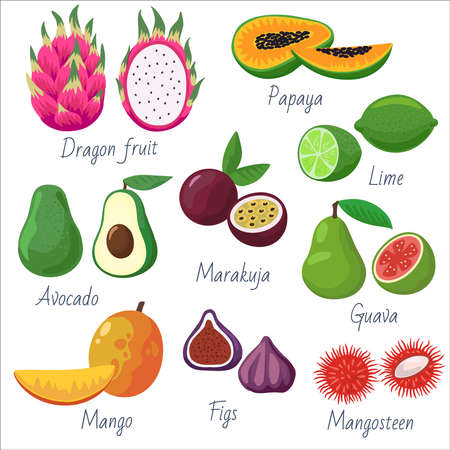 Big set of tropical and exotic fruits. Vector elements for decoration and design. Vector illustration