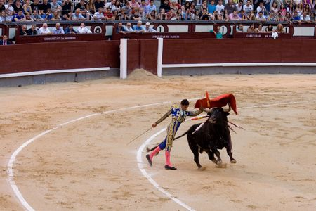 mayoral: MADRID - August 8: The torero Juan Pablo Sanchez fights a bull named Mayoral in the Las Ventas bullring on August 8, 2010 in Madrid, Spain.