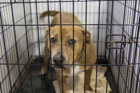 perro asustado: Un perro en un refugio de animales, a la espera de un hogar