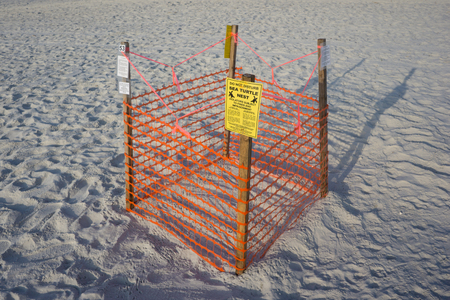 cordoned: JACKSONVILLE BEACH, FL. USA - JULY 11, 2015: A Loggerhead Sea Turtle nest on Jacksonville Beach. Florida is the second largest nesting area in the world for the Loggerhead Sea Turtle.