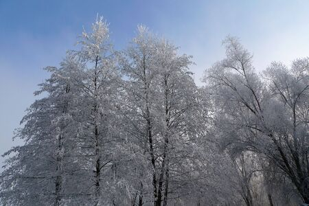 trees covered with snow and ice Stock Photo - 6359115
