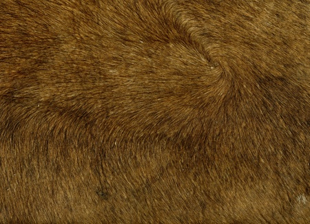 closer image of bovine leather with fur