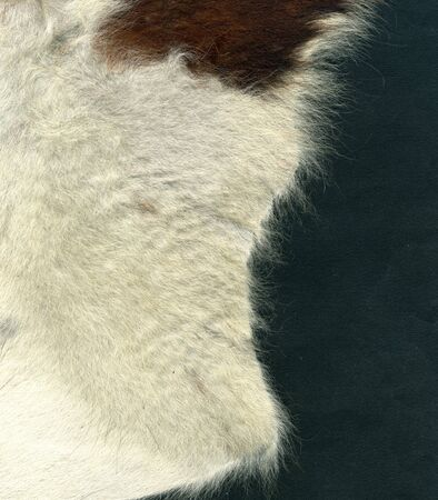 Image of bovine leather with fur on gray background