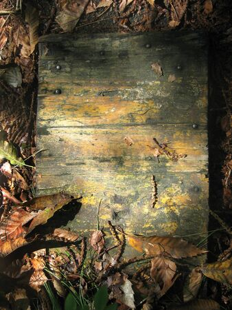Old wooden board surrounded and covered by leaves