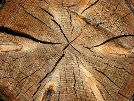 tree trunk: Cross section of an old tree log