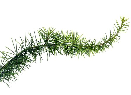 close up image of a fir tree branch