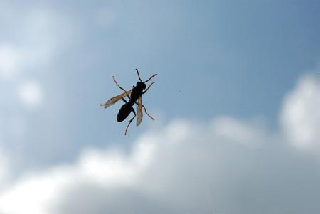 wasp profile on sky background