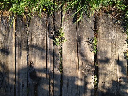 hojas antiguas: Old wooden plank, grass and green leaves