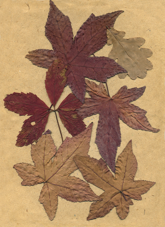 old dried fall leaves on neutral background Stock Photo